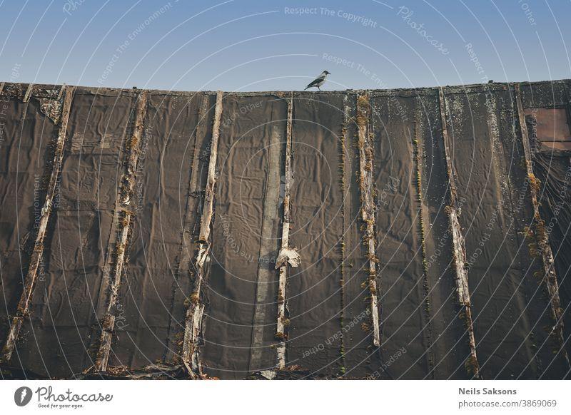 Krähe auf dem alten Scheunendach an einem sonnigen Tag Tier Vogel blau Blauer Himmel Feder gefiedert Haus Elster Moos Natur Muster Barsch gehockt Kamm Dach