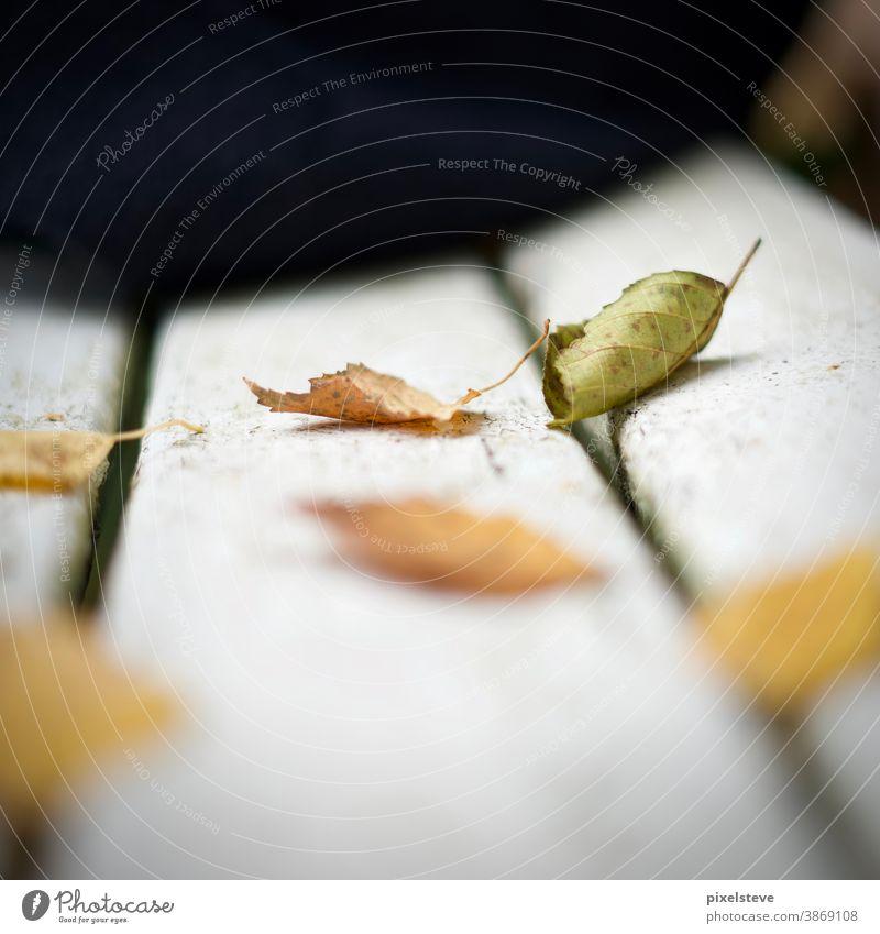 Buntes Herbstlaub auf einer Bank Herbstwald Herbstbeginn Blätter herbstlich Laubbaum Baum laubbäume Herbstlandschaft Herbstwetter Herbstgefühle ausruhend Pause