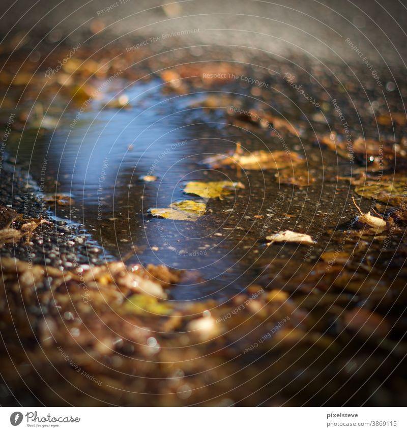 Herbstlaub in einer Pfütze Blätter herbstlich Pfützen Blatt Wald gelb braun Natur Umwelt Herbstgefühle Pfützenspiegelung Regentag Pfützenbild traurig