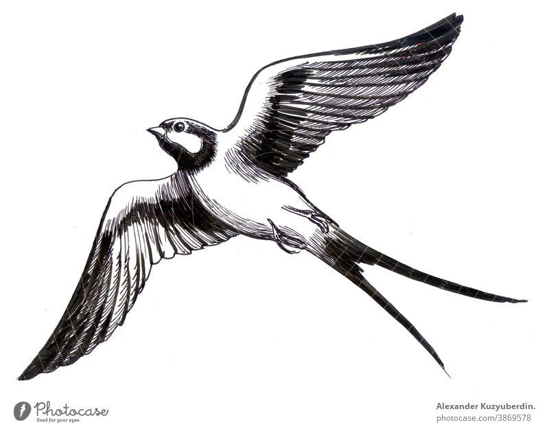 Fliegender Schwalbenvogel. Schwarzweiß-Tuschezeichnung Vogel fliegen Tier Flügel Natur Kunst Kunstwerk Hintergrund Zeichnung Grafik u. Illustration Skizze