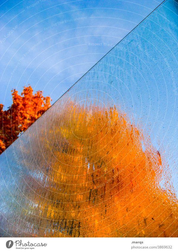 Tschüss Herbst! transparent Glasscheibe Beschlagen Farbe gelb orange blau Himmel Schönes Wetter Laubbaum feucht schemenhaft