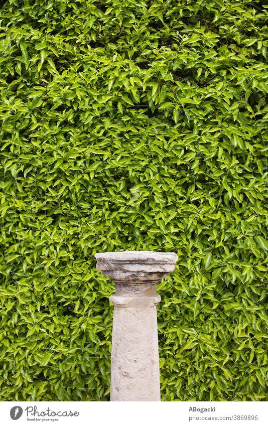 Säulensockel und Wohnwandhintergrund Textur Hintergrund Natur Pflanze Blatt Blätter Laubwerk Flora Grün grün Vegetation lebend Wand Design Element Muster Buchse