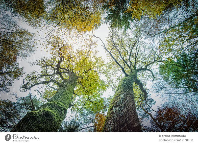 Zirtonenfarbige Herbstbäume von unten fotografiert. Ast Landschaft Tag Umgebung Laub Wald Blatt Blätter Zitrone natürlich orange im Freien Park friedlich
