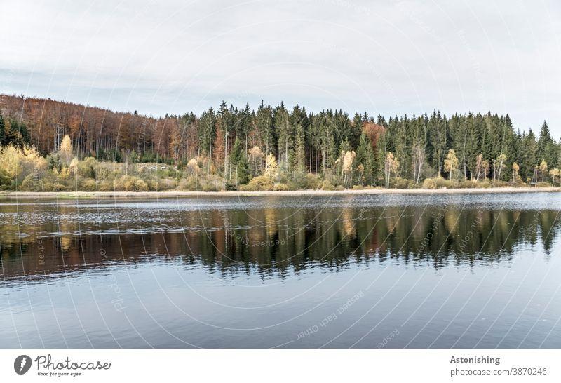 Rubner Teich, Tanner Moor Wasser Landschaft Ufer Wald Österreich Nadelwald Spiegelung Natur Himmel Horizont dunkel dunkelgrün Sumpf Außenaufnahme