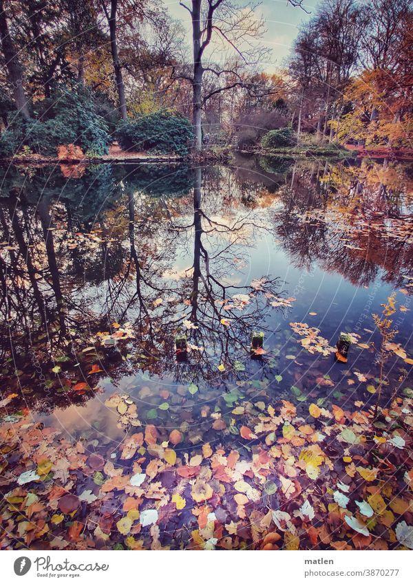 Herbst am See Blaetter Laub Herbstfärbung Baum Menschenleer Außenaufnahme Reflexion & Spiegelung Himmel Schönes Wetter Berlin Tiergarten Mobil