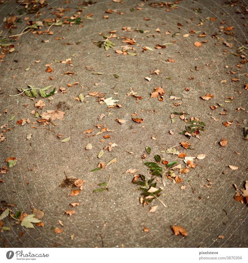 Herbstlaub auf einer Straße Herbstfärbung herbstlich Herbstgefühle Herbstwetter Laubwald Baum farbenfroh Jahreszeiten Waldstimmung Waldrand Waldlichtung