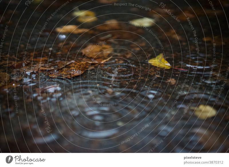 Herbstlaub in einer Pfütze Wetter Herbstwetter Regen Regentropfen Pfützen Herbstgefühle Blatt Vergänglichkeit traurig Oktober Traurigkeit nass Jahreszeiten