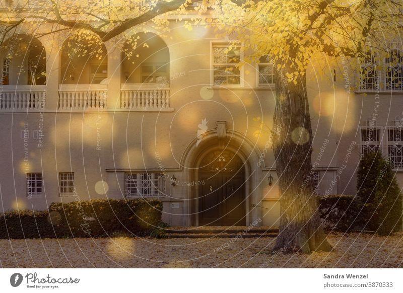 Schlosseingang im Sonnenlicht wärme Punkte Sonnenstrahlen Herbst Laub stimmungsvoll winter goldenes Licht alte mauern Vorgarten Schlosspark Tor