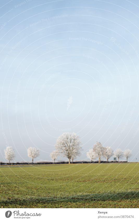 Winterlandschaft Landschaft Raureif Feld Himmel kalt Frost Farbfoto Natur Menschenleer Tag Bäume Außenaufnahme frieren Winterstimmung Wintertag Allee blau grün