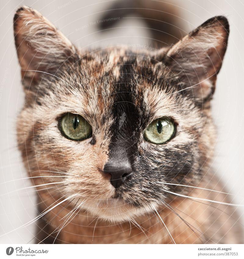 miau Tier Haustier Katze 1 beobachten Freundlichkeit schön natürlich Neugier niedlich positiv braun orange Zufriedenheit Sympathie Tierliebe Gelassenheit