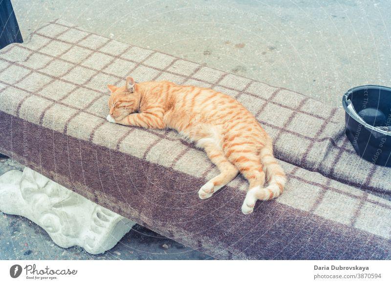Ingwer-Straßenkatze schläft auf einer Bank geschlossene Augen schlafen Gesicht im Freien heimwärts Porträt sich[Akk] entspannen katzenhaft hübsch ruhen lieblich