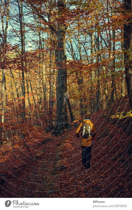 herbstrunde wandern Herbst Laubbaum laub Wald wanderweg Herbstfarben Herbstfärbung Ausflug draußen Natur Baum Außenaufnahme Herbstwald Herbstlandschaft Mensch
