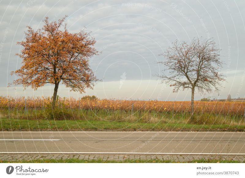 Nachbarschaften | zwei Bäume am Straßenrand, einer mit Laub und einer schon kahl Baum Herbst Himmel bedeckt Landstraße Wege & Pfade Verkehrswege Asphalt