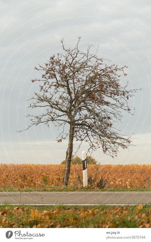 Baum am Straßenrand kahl Herbst Himmel Wolken Straßenmarkierung Pfosten Laub Herbstfärbung ländlich Umwelt Menschenleer herbstlich Herbstlaub Blätter Farbfoto