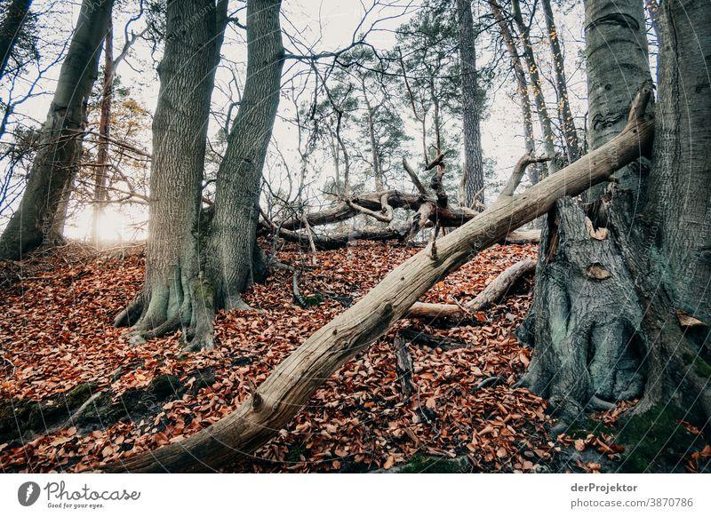 Letzter Sonnenstrahl im Brandenburger Naturschutzgebiet Landschaft Ausflug Umwelt wandern Pflanze Herbst Baum Wald Akzeptanz Vertrauen Glaube Herbstlaub