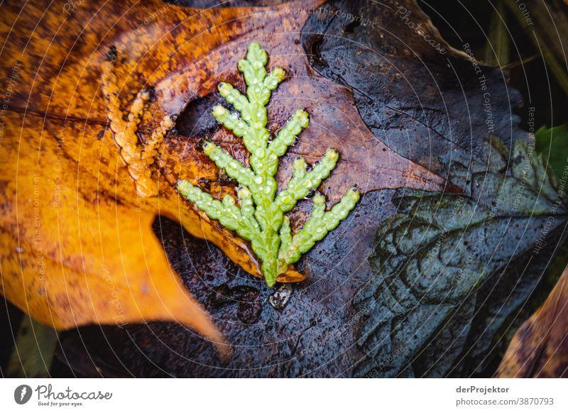 Letztes Laub im Brandenburger Naturschutzgebiet und II Landschaft Ausflug Umwelt wandern Pflanze Herbst Baum Wald Akzeptanz Vertrauen Glaube Herbstlaub