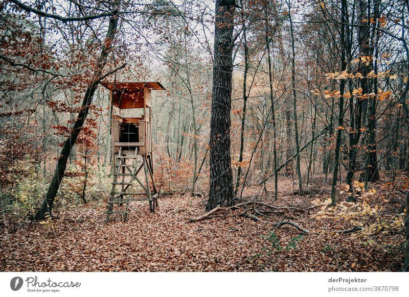 Hochsitz im Brandenburger Naturschutzgebiet Landschaft Ausflug Umwelt wandern Pflanze Herbst Baum Wald Akzeptanz Vertrauen Glaube Herbstlaub Herbstfärbung