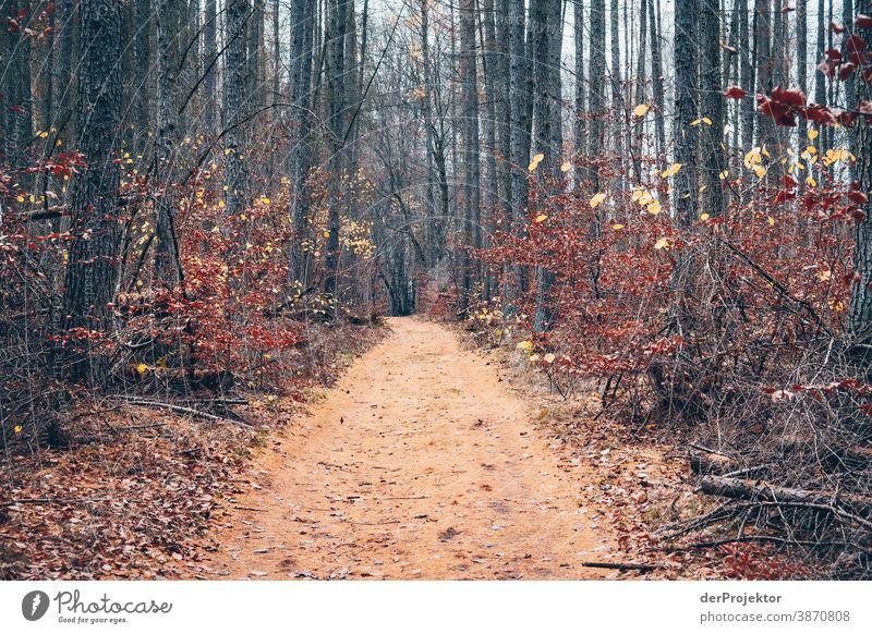 Weg mit Lärchennadeln im Brandenburger Naturschutzgebiet II Landschaft Ausflug Umwelt wandern Pflanze Herbst Baum Wald Akzeptanz Vertrauen Glaube Herbstlaub
