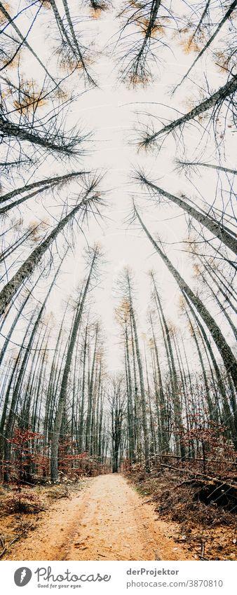 Weg mit Lärchennadeln im Brandenburger Naturschutzgebiet I Landschaft Ausflug Umwelt wandern Pflanze Herbst Baum Wald Akzeptanz Vertrauen Glaube Herbstlaub