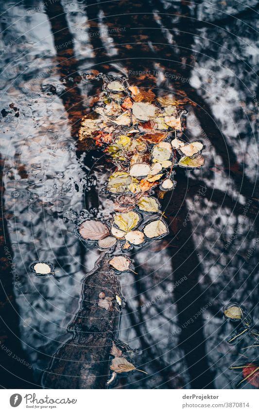 Laub in einem Fließ im Brandenburger Naturschutzgebiet Landschaft Ausflug Umwelt wandern Pflanze Herbst Baum Wald Akzeptanz Vertrauen Glaube Herbstlaub