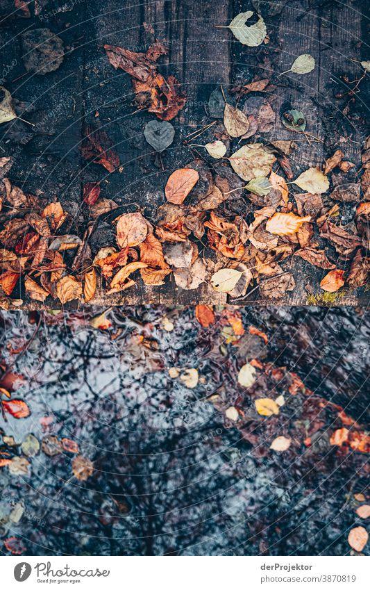 Kleiner Steg über einen Fließ im Brandenburger Naturschutzgebiet Landschaft Ausflug Umwelt wandern Pflanze Herbst Baum Wald Akzeptanz Vertrauen Glaube