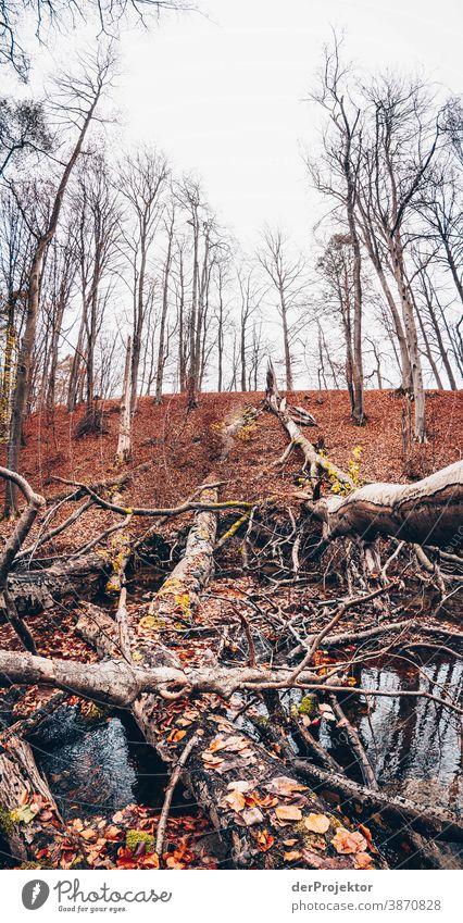 Fließ im Brandenburger Naturschutzgebiet Landschaft Ausflug Umwelt wandern Pflanze Herbst Baum Wald Akzeptanz Vertrauen Glaube Herbstlaub Herbstfärbung