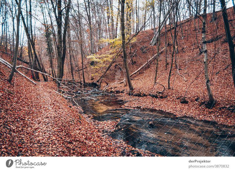 Fließ im Brandenburger Naturschutzgebiet II Landschaft Ausflug Umwelt wandern Pflanze Herbst Baum Wald Akzeptanz Vertrauen Glaube Herbstlaub Herbstfärbung