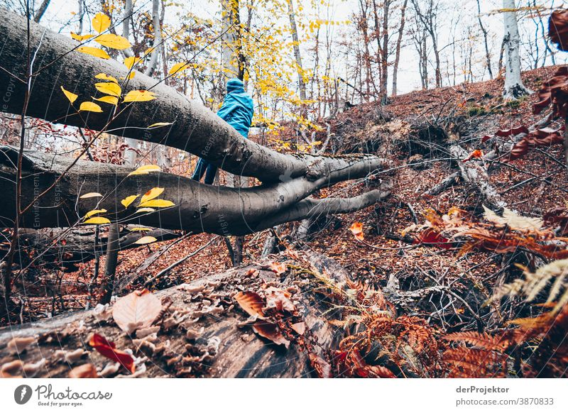 Rast im Brandenburger Naturschutzgebiet Landschaft Ausflug Umwelt wandern Pflanze Herbst Baum Wald Akzeptanz Vertrauen Glaube Herbstlaub Herbstfärbung