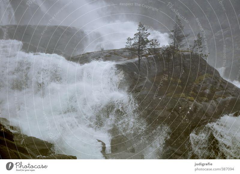 Norwegen Natur Wasser Pflanze Baum Landschaft Umwelt dunkel natürlich Felsen Stimmung wild Klima nass fließen Wasserfall