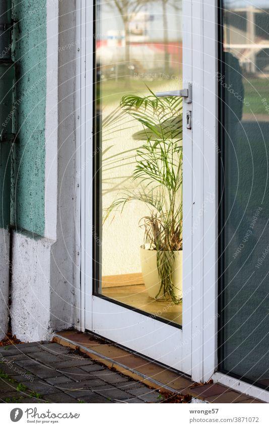 Blick durch eine Glastür in das Innere eines Büros mit einer Kübelpflanze als Zimmerschmuck Eingangstür Laden Durchsicht Spiegelungen Zimmerpalme Zimmerpflanze