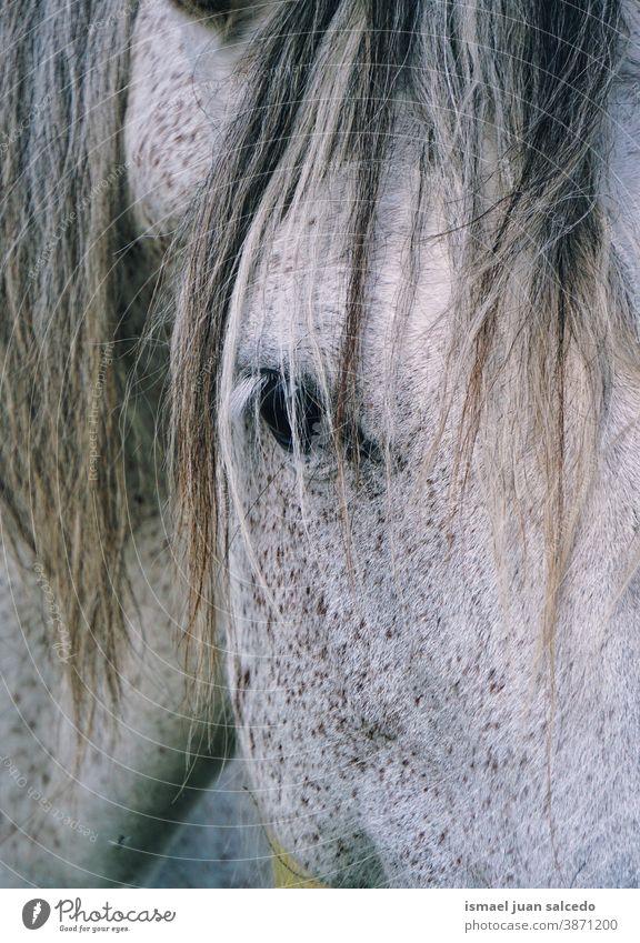 Porträt des weißen Pferdes Tier wild Kopf Auge Ohren Behaarung Natur niedlich Schönheit elegant wildes Leben Tierwelt ländlich Wiese Bauernhof Weidenutzung