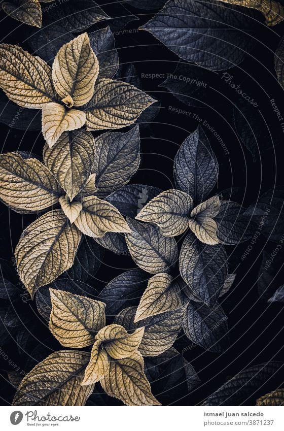 Blaue und gelbe Pflanzenblätter in der Natur im Herbst Blätter Blatt blau grün farbenfroh Garten geblümt natürlich Laubwerk dekorativ Dekoration & Verzierung