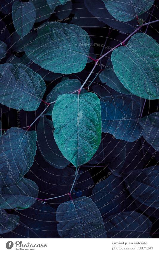 grüne Pflanzenblätter im Herbstsaison, grüner Hintergrund Blätter Blatt Garten geblümt Natur natürlich Laubwerk dekorativ Dekoration & Verzierung abstrakt