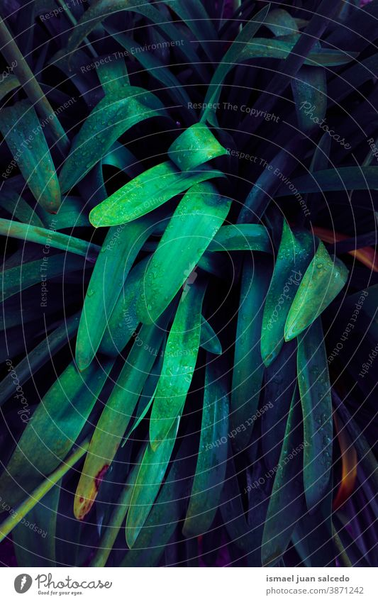 grüne und blaue Pflanzenblätter, grüner Hintergrund Blätter Blatt farbenfroh Garten geblümt Natur natürlich Laubwerk dekorativ Dekoration & Verzierung abstrakt