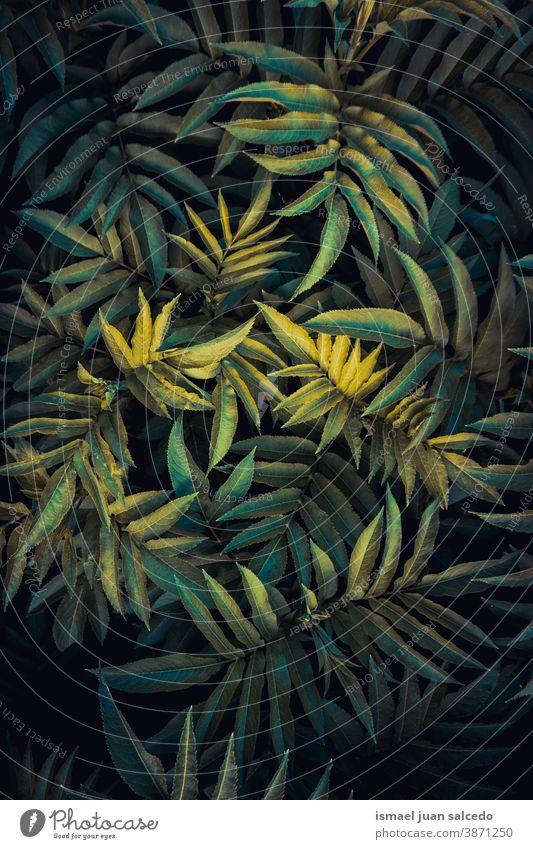 grüne Pflanzenblätter in der Natur in der Herbstsaison Blätter Blatt Garten geblümt natürlich Laubwerk dekorativ Dekoration & Verzierung abstrakt texturiert