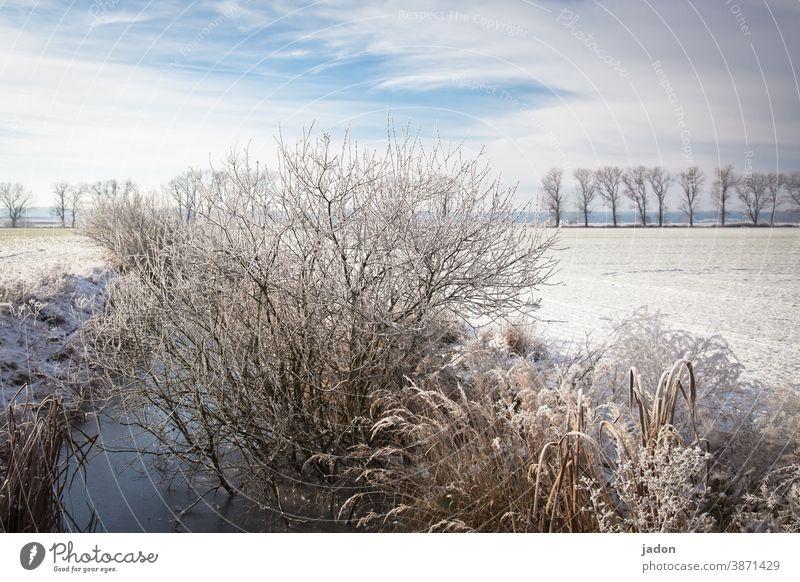 der nächste winter kommt bestimmt (wieder nicht). Winter Schnee Sonne Himmel kalt Eis Frost Baum blau Landschaft Feld Menschenleer Schönes Wetter Umwelt Pflanze