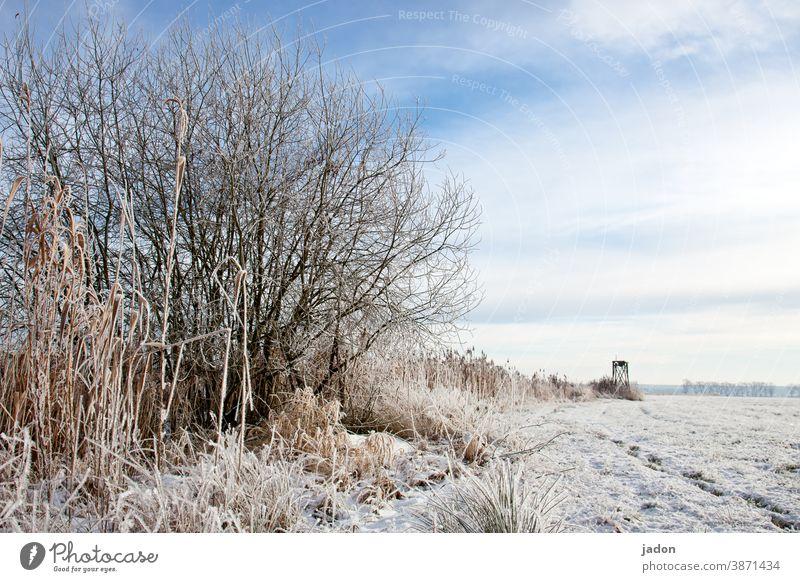 winter bis zum horizont. Winter Feld Schnee kalt Natur Baum Menschenleer Textfreiraum oben weiß Eis Frost Umwelt Pflanze Landschaft Horizont Schönes Wetter