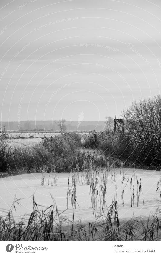 weihnachtsgruß. Schnee Eis Winter kalt Frost gefroren frieren Natur weiß Wasser Felder Schwarzweißfoto Büsche Außenaufnahme Pflanze Horizont Menschenleer Umwelt
