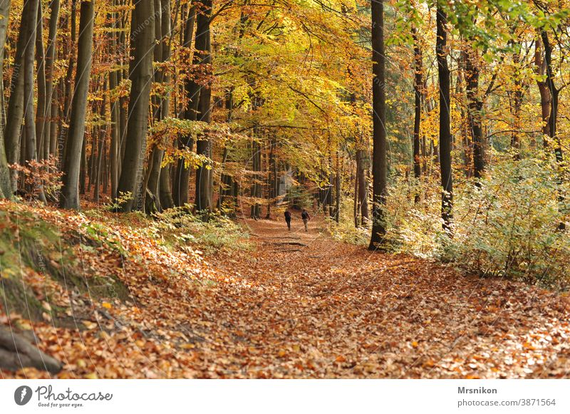 Herbstspaziergang herbst wald waldweg blätter baum bäume waldtag Natur Baum Blätter Landschaft Sonne Sonnenlicht Laub natürlich Blatt Licht Park grün Bäume Wald