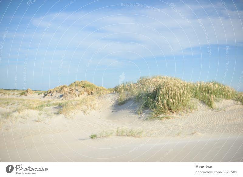 Düne Dünen sommer Strand Ferien & Urlaub & Reisen Natur Himmel Nordsee Küste Landschaft Sand Dünengras Außenaufnahme Erholung Farbfoto Tourismus Wolken Meer