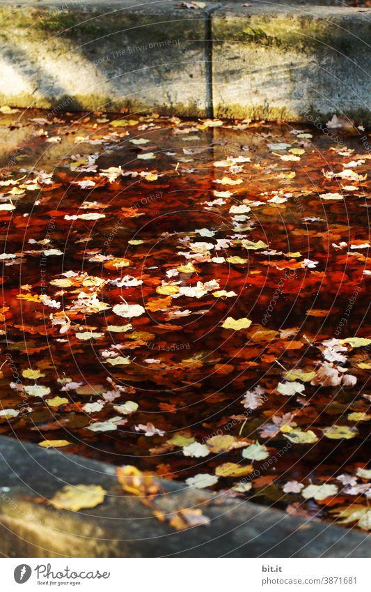 Farbkombination l goldener Herbst Pflanze gelb Herbstlaub Blatt Natur herbstlich Herbstfärbung braun Herbstbeginn mehrfarbig Umwelt Jahreszeiten Herbstwetter