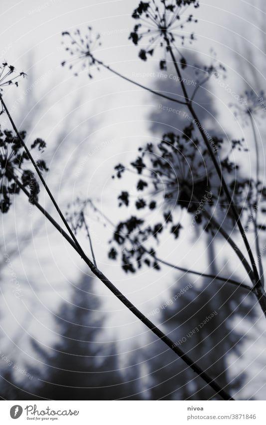 Sträucher im Wald Gedeckte Farben Herbst Tod Trauer Nebel Umriss Nebelschleier Winter Menschenleer Außenaufnahme dunkel Einsamkeit kalt Landschaft Traurigkeit