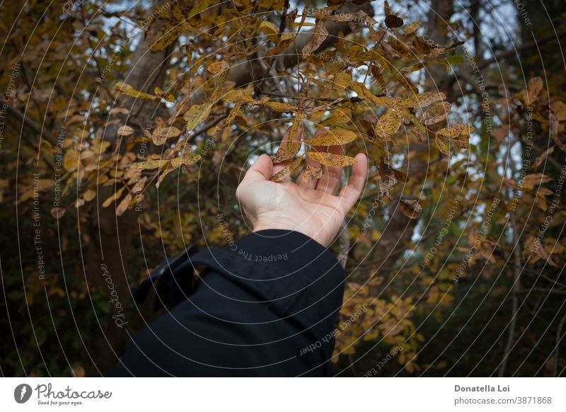 Blattwerk im Wald mit der Hand berühren Erwachsener Herbst Pflege Kaukasier Nahaufnahme Konzept Detailaufnahme trocknen Laubwerk Beteiligung menschlich Blätter