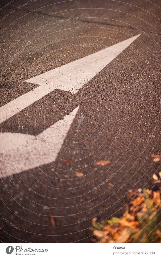 Richtungspfeil im Abendlicht navigation wegzeichen Fahrspur Fahrbahn weiß rechts orientierung menschenleer orange grau Straßenrand Laub geradeaus wegweiser
