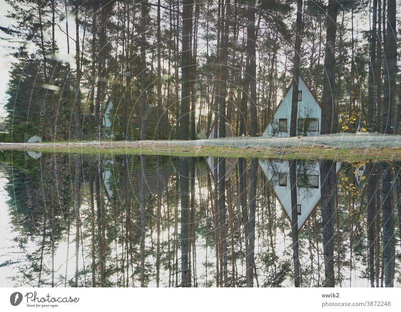 Einsiedelei Feriensiedlung Bungalows Außenaufnahme Farbfoto Natur Erholung einfach Dachschräge Landschaft Baum Wald Dreieck Baumstämme Ferienhaus Ferienhütte