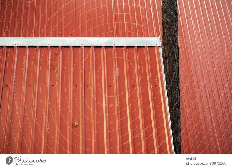 Parallelwelt Dach Blech rot einfach leuchtende Farben Dachschräge Baum Störfaktor hineindrängeln aufdringlich Menschenleer Außenaufnahme Farbfoto Detailaufnahme