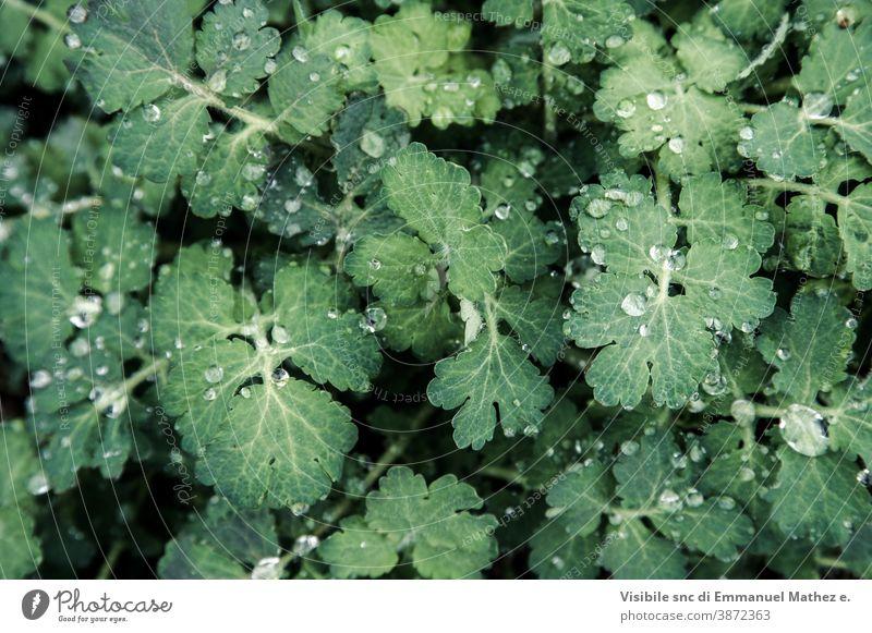 Frühlingsgrasklee ähnlich mit Tau bedeckt dekorativ Wildpflanze Wiese Klee frisch Blütenblätter Gras Makro Blatt grün Blütezeit Unschärfe Nahaufnahme Kleeblatt
