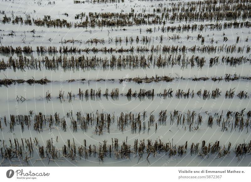 überflutete geschnittene Weizenfelder Überschwemmung Ackerland Feld Ententeich Landwirtschaft Aussaat landwirtschaftlich schlechtes Wetter Wasser ländlich grün