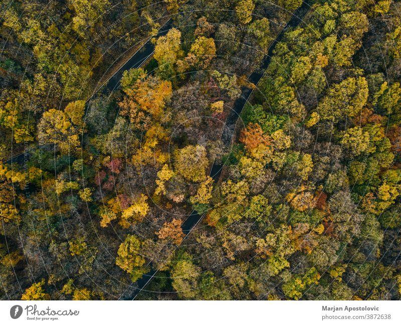Luftaufnahme des Waldes im Herbst oben Abenteuer Antenne Air Fluggerät Hintergrund schön Buchsbaum farbenfroh Farben Landschaft Tag Dröhnen Umwelt Europa