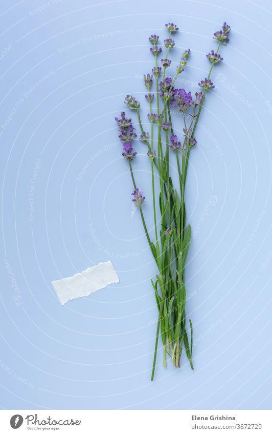 Blühende Lavendelzweige auf blauem Hintergrund, Leerer Platz für Text. Kräuter-Mockup Herbarium vertikal Blumen-Layout frisch Blumenstrauß sehr wenige geblümt